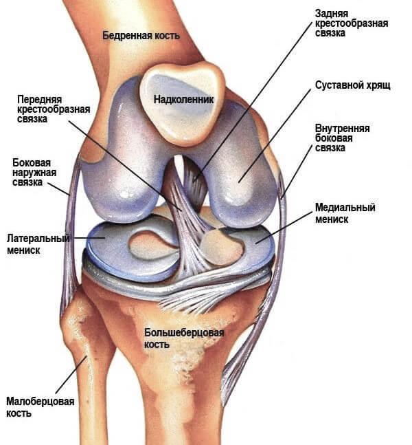 схема колена